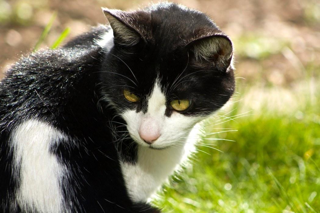 Cat in a garden thinking